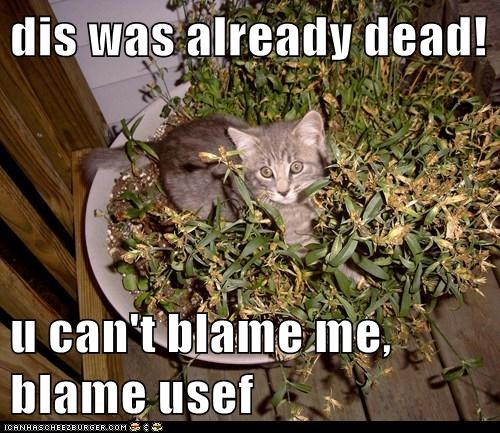 blame,captions,Cats,dead,fault,plant