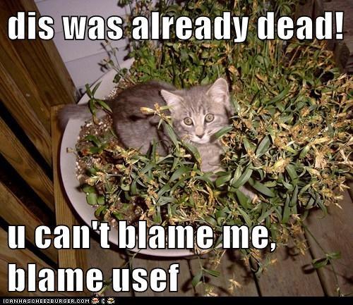 blame captions Cats dead fault plant - 6534571520
