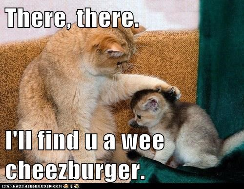 Cheezburger Image 6534607360