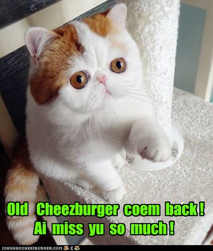 Cheezburger Image 6534752768