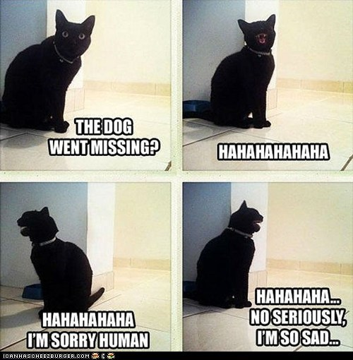 Cats dogs im sorry laughing lies missing multipanel Sad