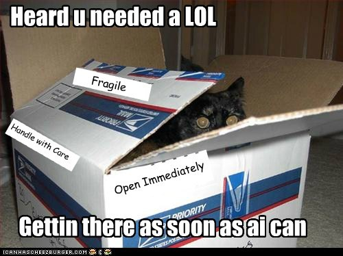 box,captions,Cats,lol,mail,package,send