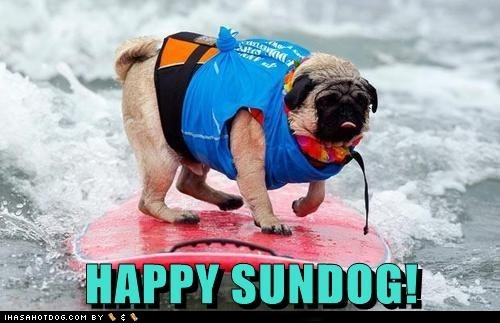 dogs,happy sundog,ocean,pug,Sundog,surf board,surfing,waves