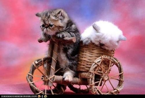 bikes,Cats,cyoot kitteh of teh day,kitten,pedicab,riding,two cats,wicker