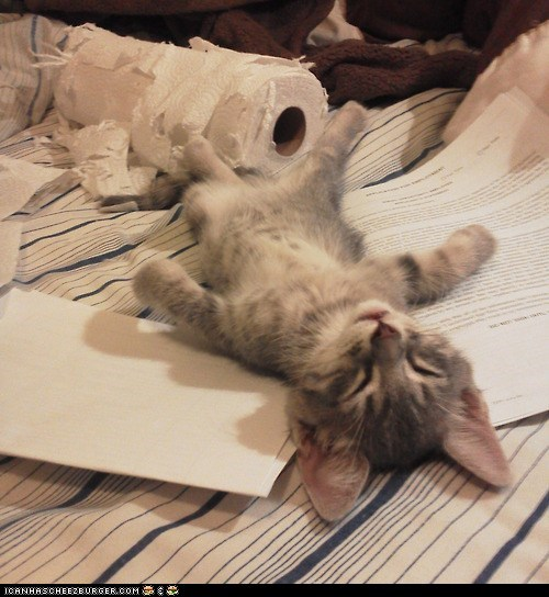 asleep Cats cyoot kitteh of teh day homework kitten paper towels relaxed sleeping tired - 6535438592