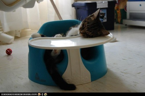 booster seat Cats comfort is relative cyoot kitteh of teh day kitten sleeping - 6535447552