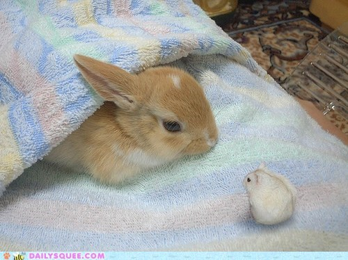 blanket bunny Fluffy hamster happy bunday rabbit squee - 6535523072