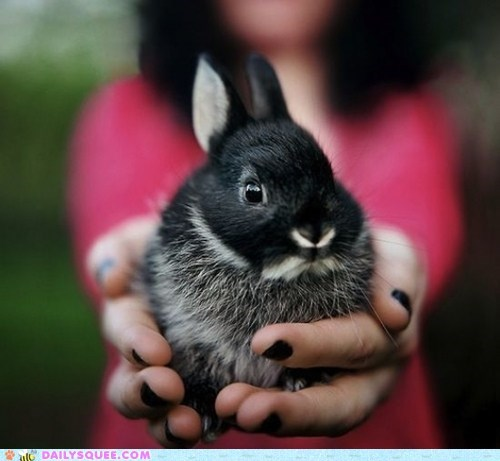 black,bundle,bunny,gift,happy bunday,present,rabbit