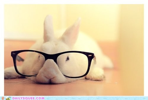 bored bunny glasses happy bunday nerd rabbit tired - 6535555840