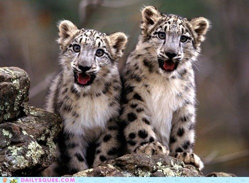 crazy cubs goodbye smile snow leopard squee squee spree - 6535565824