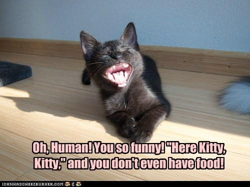 "Oh, Human! You so funny! ""Here Kitty, Kitty,"" and you don't even have food!"