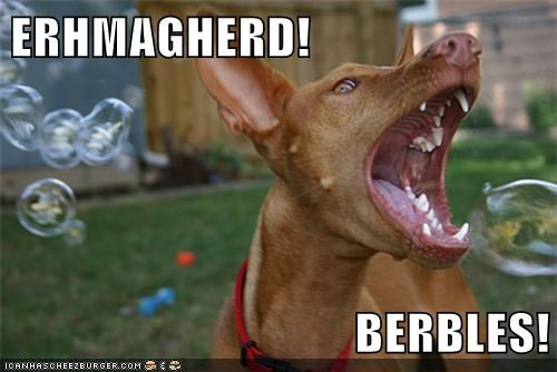 bubbles captions dogs Ermahgerd excited happy playing vizsla