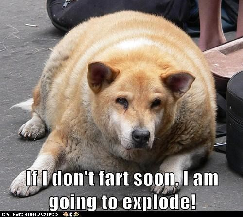 dogs explode farts fat tacos what breed