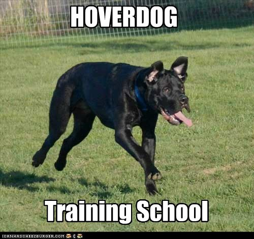 derp dogs hover dog tongue training what breed