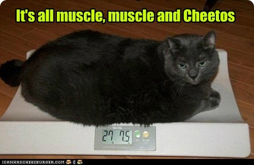 captions Cats cheetos fat muscle weight