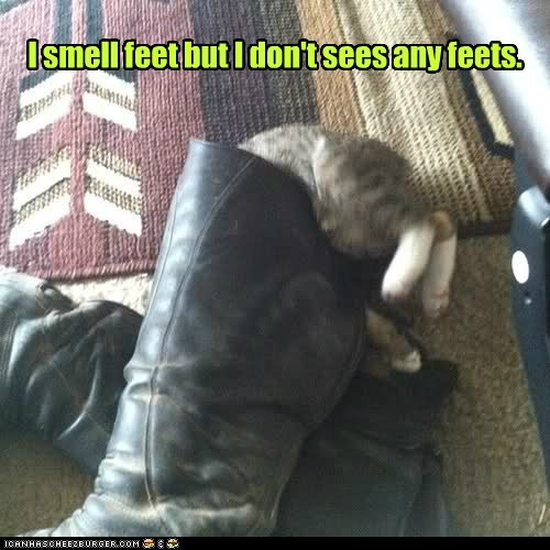 boot captions Cats feet foot mystery shoe smell - 6536442880