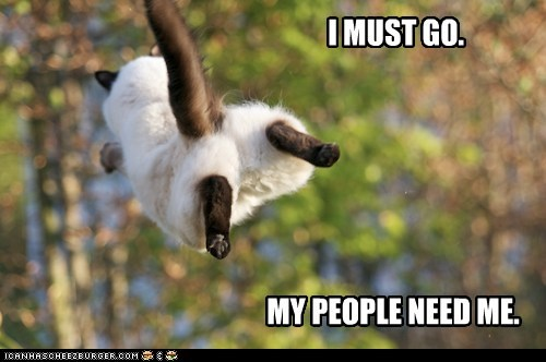 captions Cats fly i must go leave my people