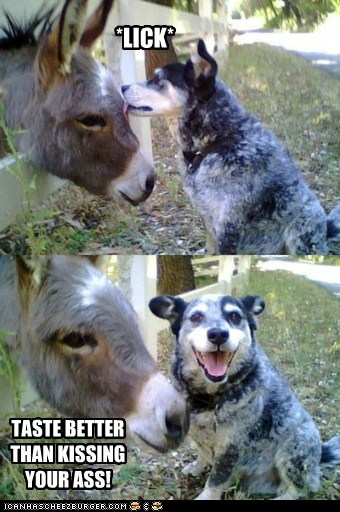 dogs donkey kissing licking pun taste