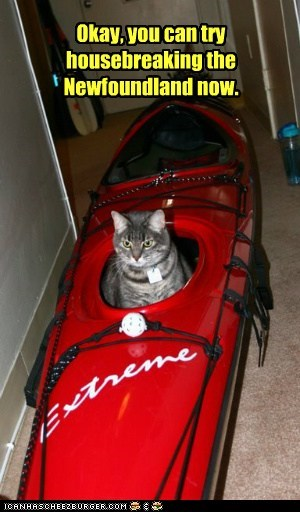 captions Cats housebreak kayak newfoundland pee urine - 6537123584
