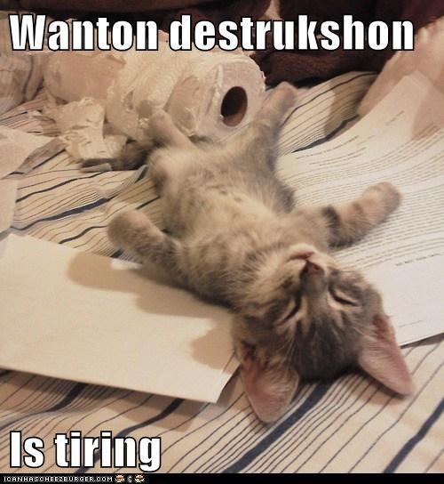 captions Cats destroy destruction tired tiring wanton - 6537142784