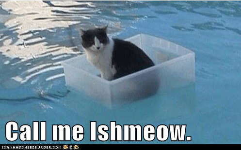 book call captions Cats ishmael literature moby dick novel - 6537563136