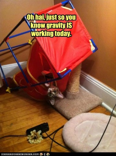 captions Cats fall fyi Gravity physics