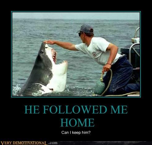 home ocean pet shark - 6537756928