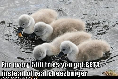 Cheezburger Image 6537795328