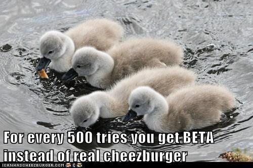 Cheezburger Image 6537795328