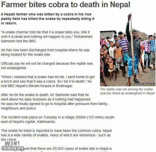 BAMF cobra completely relevant news nepal snake world news