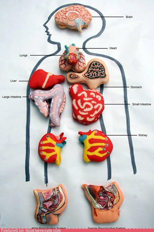 anatomical cookies detailed epicute macarons Painted