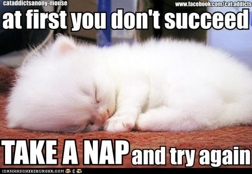 captions Cats if-at-first-you-dont-suc if-at-first-you-dont-succeed kitten napping naps tiny try again - 6538016000