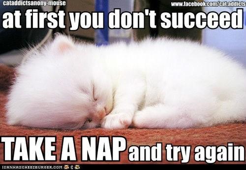 captions Cats kitten napping naps tiny try again - 6538016000