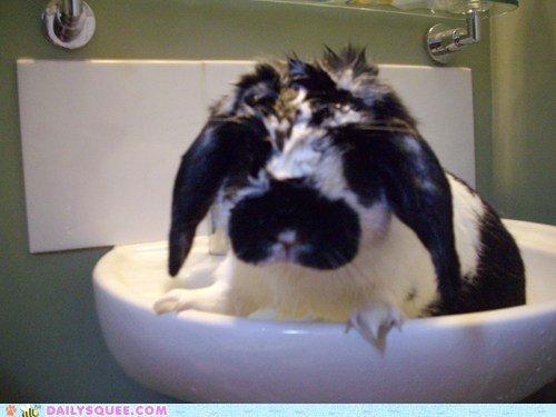 bath,bunny,happy bunday,rabbit,reader squee,soaked