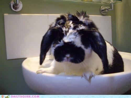 bath bunny happy bunday rabbit reader squee soaked - 6538289664