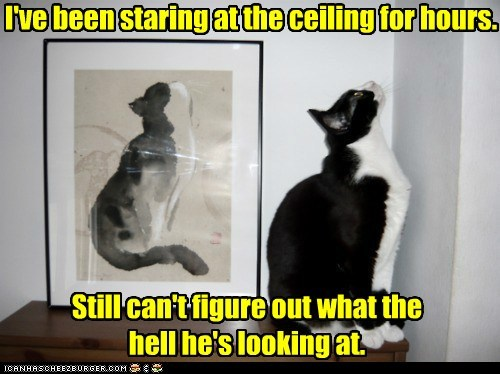 hours ceiling stare confused Cats captions - 6538427392