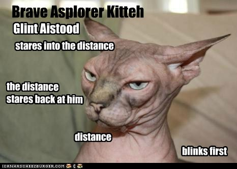 Brave Asplorer Kitteh the distance stares back at him distance Glint Aistood stares into the distance blinks first
