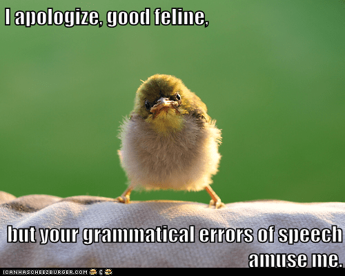 amusing angry apologize bird error grammar lolspeak polite - 6539276288