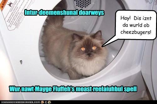Cheezburger Image 6539424000