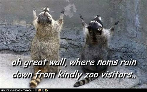 food,kindly,noms,praying,raccoons,visitors,zoo