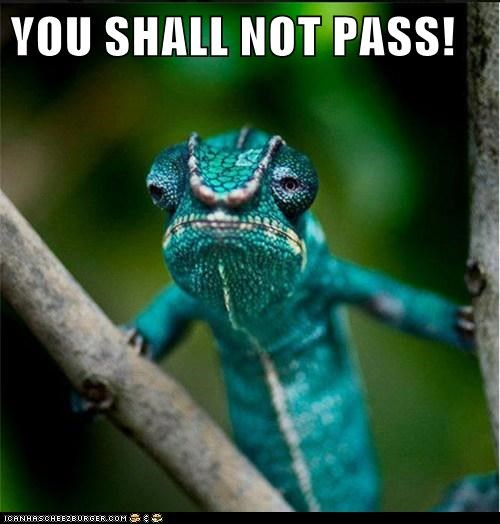 chameleon,gandalf,lizard,Lord of the Rings,tree,you shall not pass