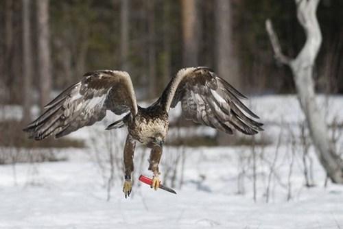 animals funny hawk knife wtf - 6539854080