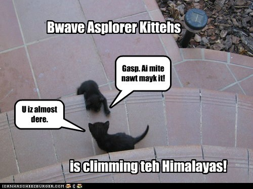 brave,brave explorer kitteh,captions,Cats,climb,Himalayan Mountains