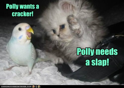 Polly wants a cracker! Polly needs a slap!