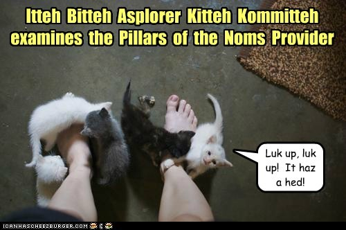 Itteh Bitteh Asplorer Kitteh Kommitteh examines the Pillars of the Noms Provider Luk up, luk up! It haz a hed!