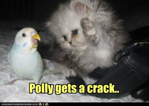 Polly gets a crack..