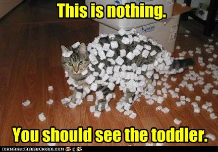 captions,Cats,packing peanuts,toddler