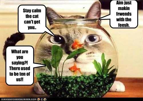 Aim just makin frwends with the feesh. Stay calm the cat can't get you.. What are you saying?! There used to be ten of us!!