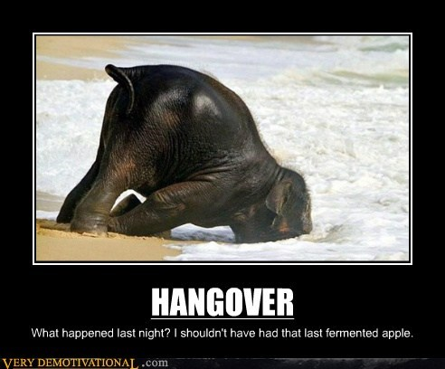 HANGOVER What happened last night? I shouldn't have had that last fermented apple.