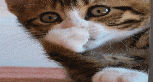 GIFs of kittens being cute and goofing around